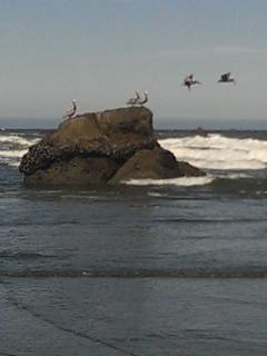 our beach.  Bird Migration