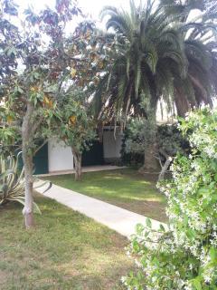 Entrando dal cancello di casa... A sinistra c'è una magnolia, ma non si vede.