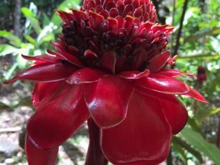 Flower at Indian Riveru