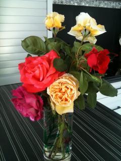 Nos jolies roses du jardin