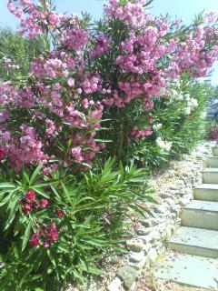 Steps leading down to Casita Oleander