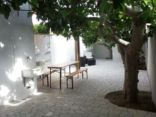 giardino con alberi di fico secolari