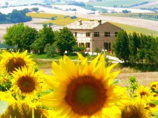 La Villa Scatola, Gallignano