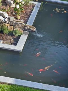 The zen garden with a pond full of exotic fishes.