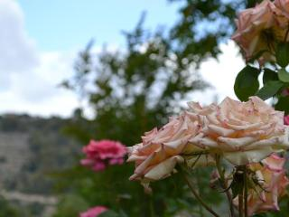 Le Rose garden