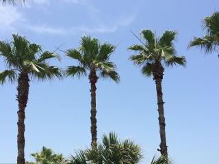 Where Palm Trees Sway - A Blessed GetAway!, Isla del Padre Sur
