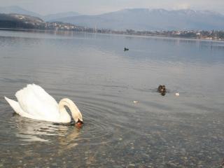 Una Finestra Sul Lago, Varano Borghi