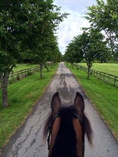 The driveway in summertime at Durhams Farm, as seen through horses ears