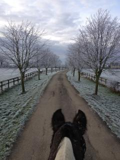 The driveway in winter at Durhams Farm, as seen through horses ears.