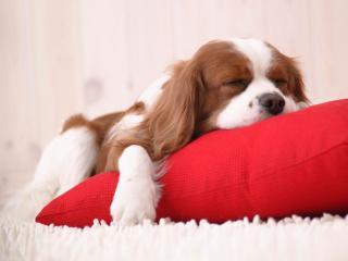 Creche e Hotel para cães em Brusque