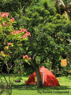 Your tents are set in the colourful CarRod`s gardens.  Come uncomplicate yourself.