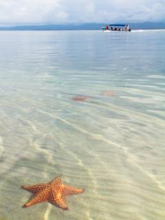 The crystal clear waters of Starfish beach!
