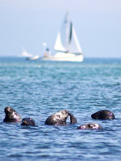 Seal Colony at Head of the Meadow Beach (3 Miles away)