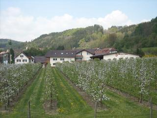 Vacation Apartment in Stockach - 797 sqft, 2 bedrooms, max. 4 people (# 8295)