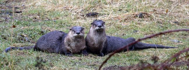 They otter know it's a great place to stay!