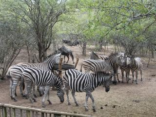 Zinkwazibush lodge (4 Star) - Self catering