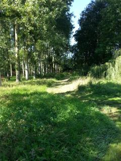 A peaceful walk in our woodland area is ideal for exercising your dog or children