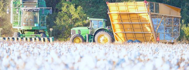 Cotton harvest Coryell County.