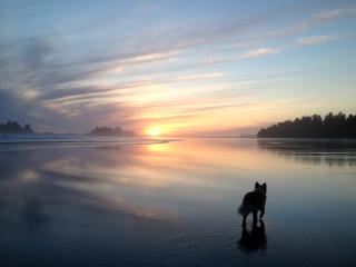 A Surfers's Paradise, Tofino