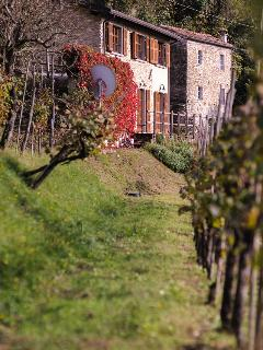 The house through the vines.