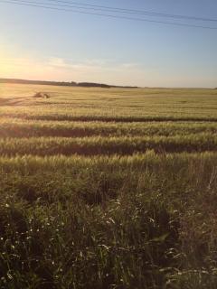 Gutshaus Groß Helle umliegende Felder am Morgen