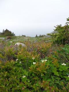 East Coast trail