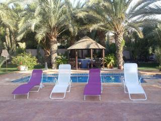 Un oasis de palmeras ideal para familias y amigos, Elche