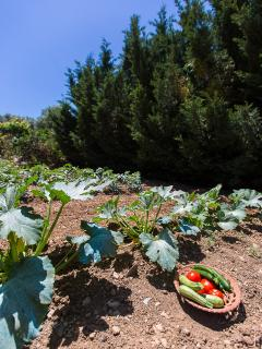 Our vegetable garden  which you can enjoy with your meal