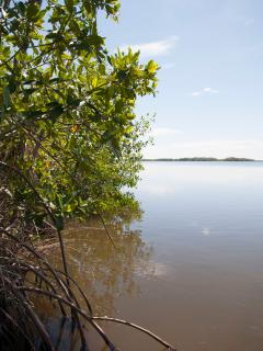 Fishing Enthusiast? Placencia Lagoon is Very Close to Maya Beach Stann Creek. Welcome!