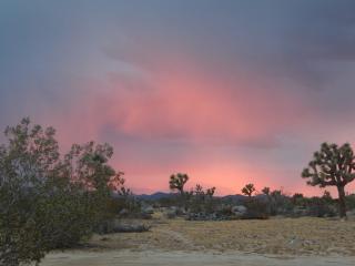 Desert Bliss, Yucca Valley