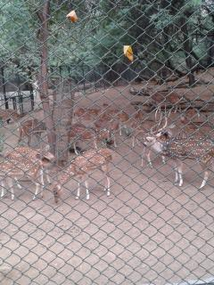 Deer Park