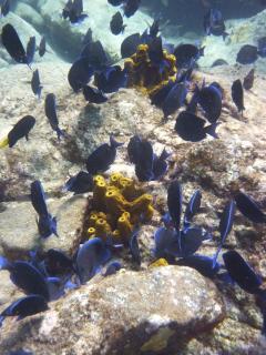Nous sommes à 35 minutes de la réserve Cousteau, haut-lieu de la plongée sous-marine