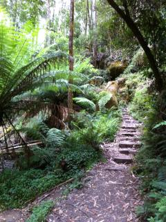 Ferns, forest, mountains - there's lots to see and visit when you stay at Valley View Cottage