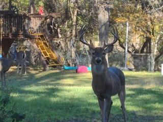 Parklike Backyard, Deer on 1 Acre!