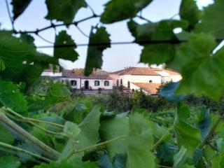 Etna Casa Vacaze, Piedimonte Etneo
