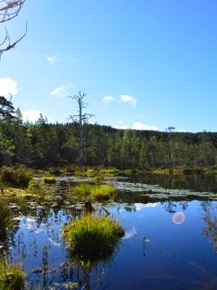 The beautiful Glen Affric Nature reserve only a short drive from West Lodge