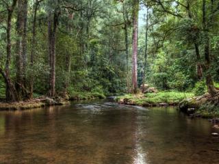 Sunnybank - The Cedars Farm Stays, Kangaroo Valley