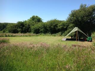 Dandelion Pitch - COASTAL WOOD CAMPING, Amroth
