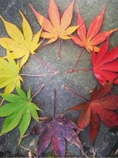 Awesome leaf viewing and collecting