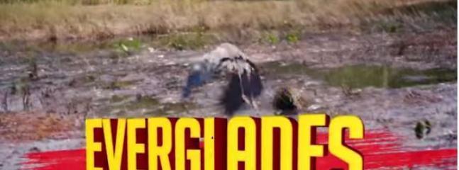 Everglades 20 minutes