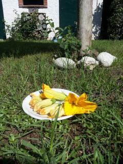 I fiori di zucca del mio primo orto sono serviti!