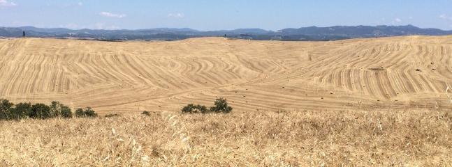 Panorama delle crete senesi - campi di grano