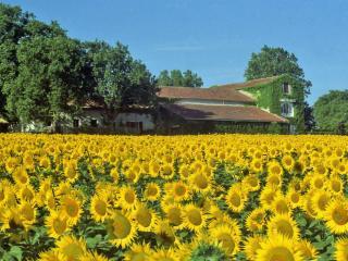 maison de campagne près de Carcassonne et Limoux, La Courtete