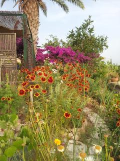 garden view - june