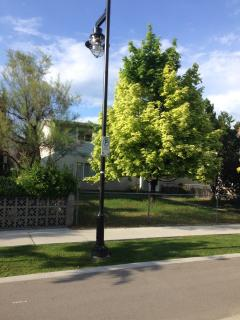 Kelowna Sun! Sit under the beautiful Maple Tree sipping Summerhill Wine after fun at the beach.