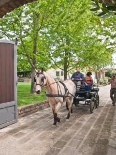 Ingresso villa con nostra carrozza e nostro cavallo