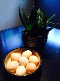 Complimentary fresh eggs from our chickens (available seasonally)
