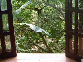 Private Cabina | Jungle View | Luz en el Cielo