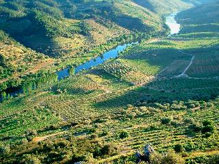 Casa Oliveiras do Douro