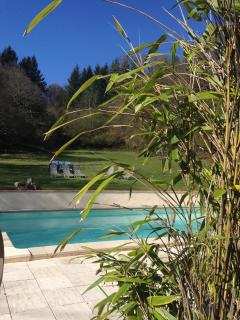 heated pool and main garden